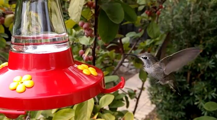 Nexus 6P kolibri hidastusvideo
